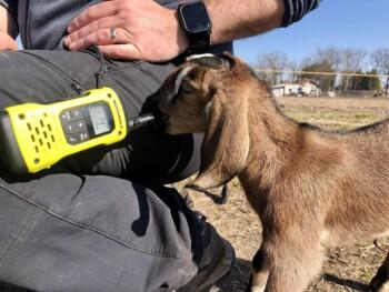 Motorola T92 walkie-talkiek a Zippi Farmon